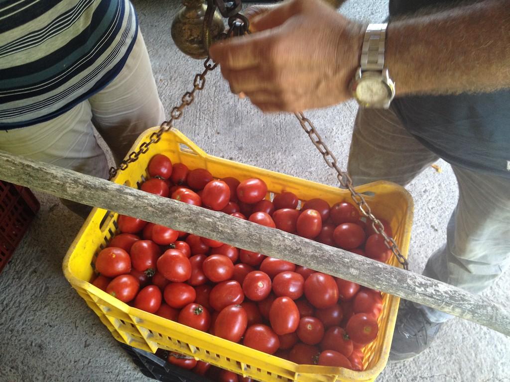 Anche il peso del pomodoro Re Umberto avviene come da tradizione: con la bilancia tipo stadera