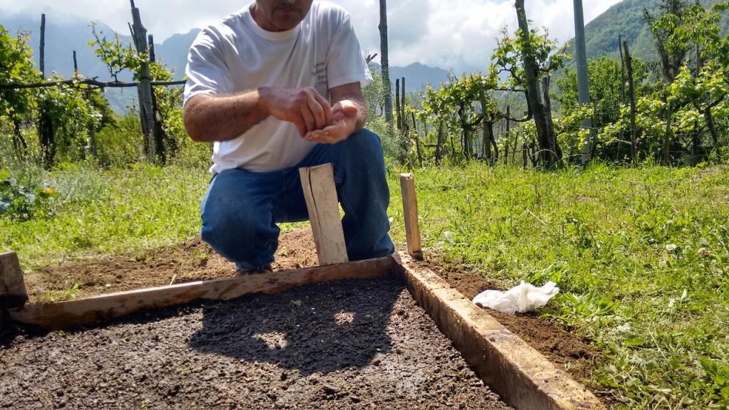 Il semenzaio realizzato presso la sede di Acarbio